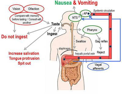 Overcoming Nausea And No Appetite While On TB Spine Treatment?