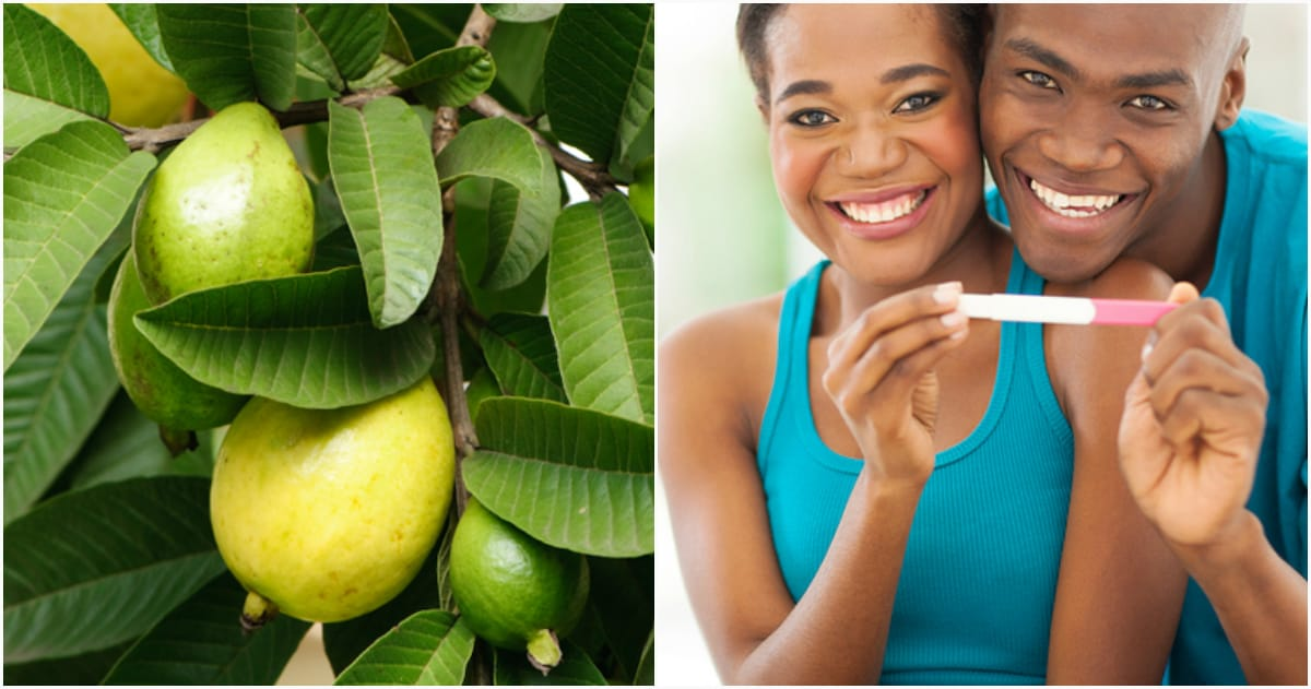Can Guava Leaves Fertilize Hair Loss?