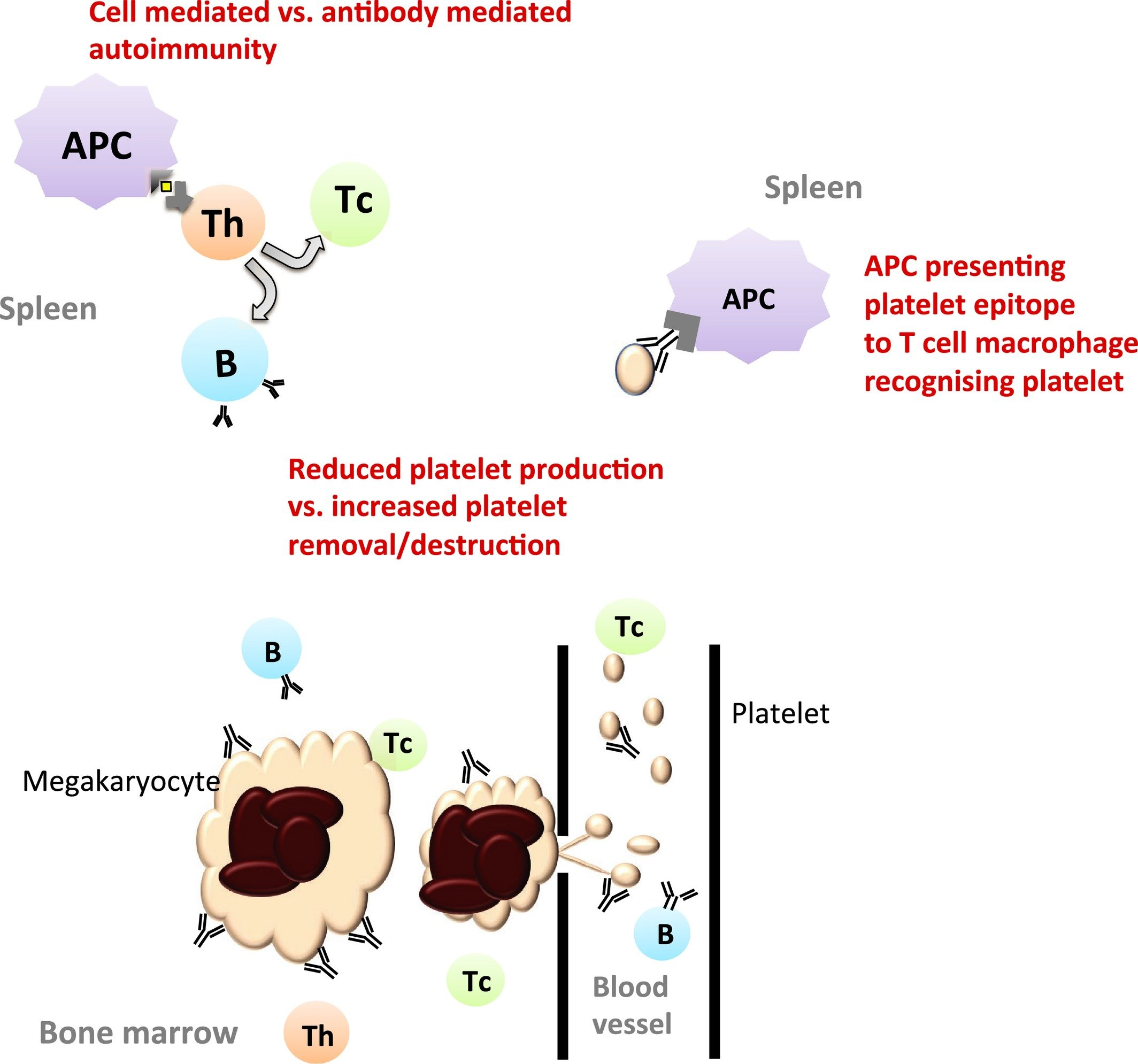 How To Keep Platelets Stable?