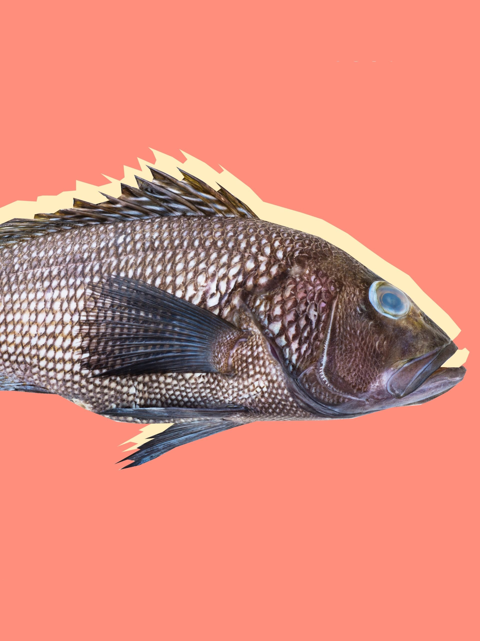Fishy-smelling Discharge Coming Out Of The Head Feels Itchy And The Body Itches With Reddish Spots?