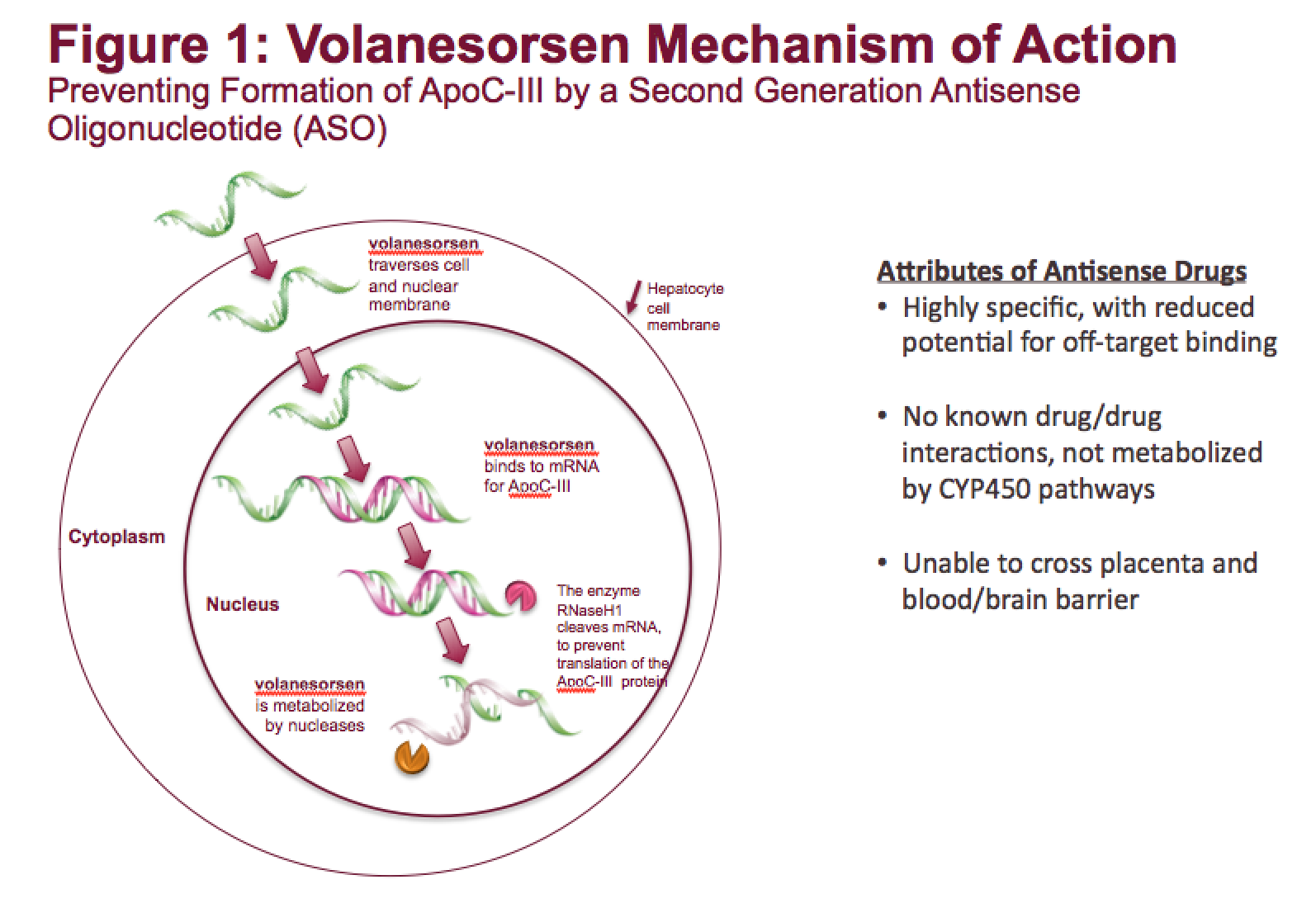 Action For High Triglyceride Levels?