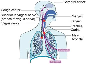 Coughing Accompanied By Breath Sounds And Limp Body In Children Aged 1 Year?
