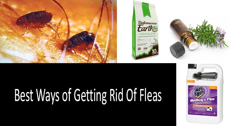 Effective Treatment For Water Fleas In The Legs?