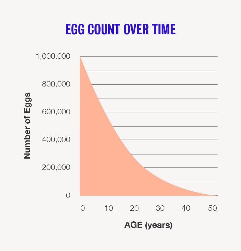 Normal Number And Size Of Eggs In Women?