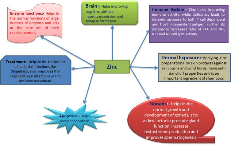 Effects Of Zinc Supplement Consumption And Concurrent Growth?