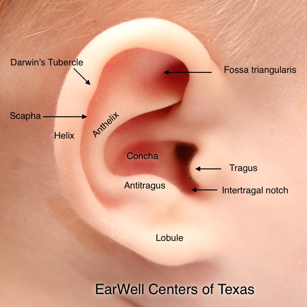 The Cause Of The Baby's Reddish Ear Folds?