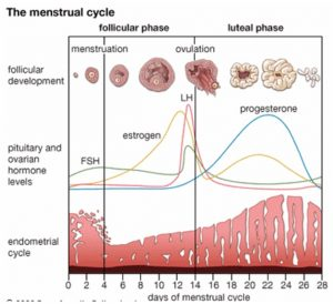 Changes In The Menstrual Cycle After Taking Medication For Endometriosis?